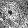 Como sabréis, estamos hechos de millones y millones de pequeñas células. Pero, ¿qué tenemos dentro de nuestras células? En este artículo vais a encontrar un pequeño resumen de (casi) todo...